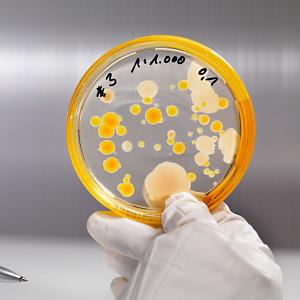 bacteria01