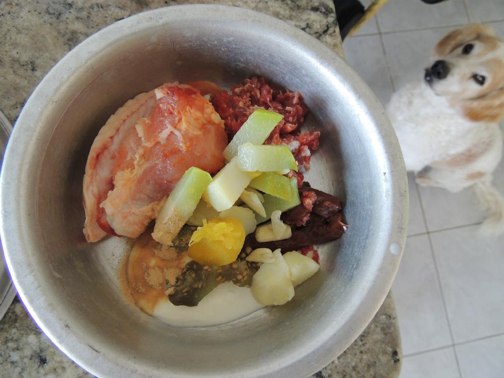 Pingado e sua refeição: pescoço/cabeça/asa de frango, carne moída e fígado bovino. Vegetais – chuchú, mandioquinha, batata e berinjela cozidos. Alho, iogurte e levedo (o azeite ele recebe na refeição da noite).