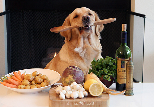 dog-cook