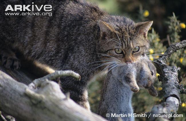 Seu gato: um predador por excelência!