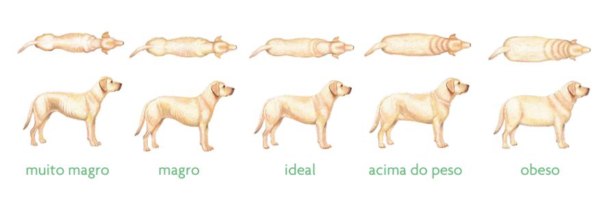 dogchart